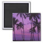 Moon and Palm Tree Fridge Magnet