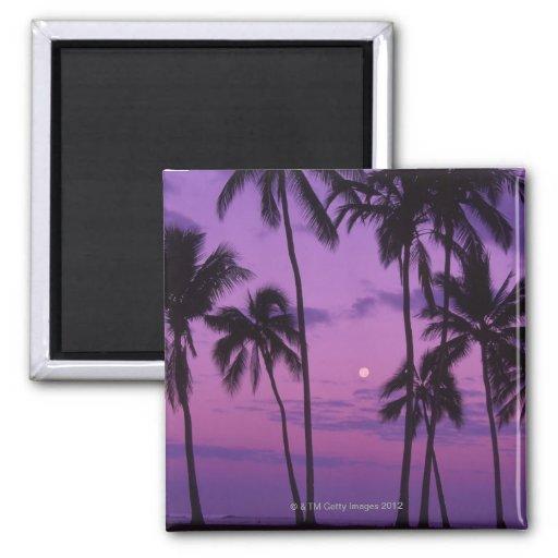 Moon and Palm Tree Fridge Magnet