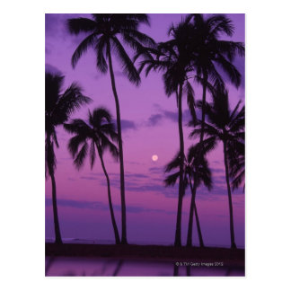 Moon and Palm Tree Post Cards