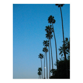 moon and palm trees postcard