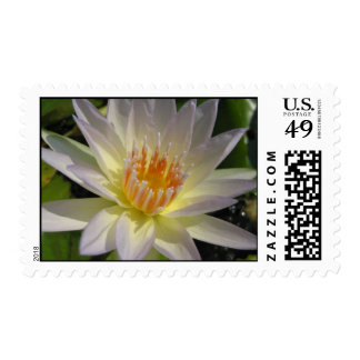 Moon Beam Postage Stamps