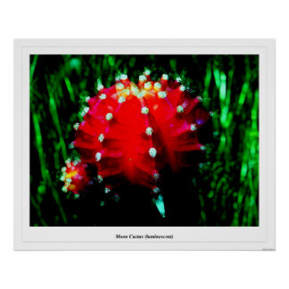 Moon Cactus (luminescent) Poster