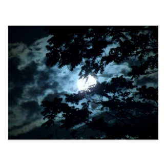 Moon Illuminates the Night behind Tree Branches Postcard