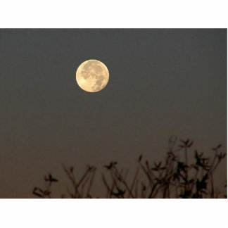 Moon In Nigh Time Photo Cut Outs