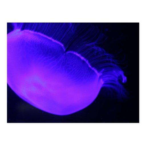 Moon Jellyfish # 17 Postcard