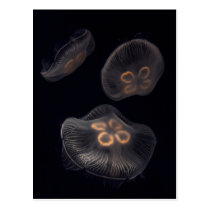 Moon Jellyfish Swimming Postcard