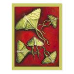 Moon Moths Postcard