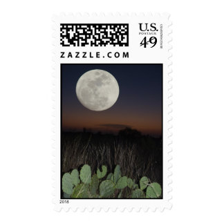 Moon over Cactus Stamp