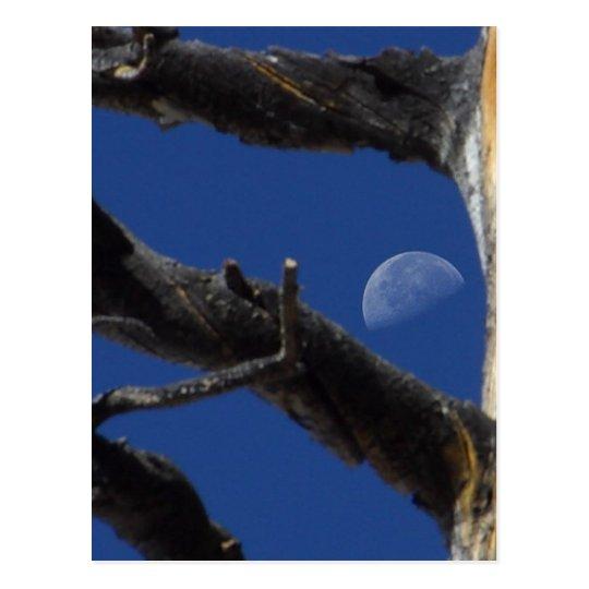 Moon Seen From Tree Postcard