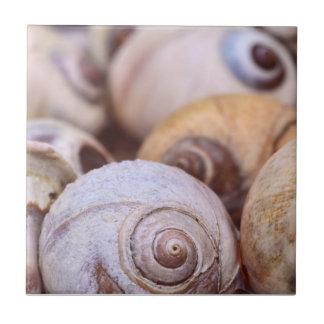 Moon Snail Shells Tiles