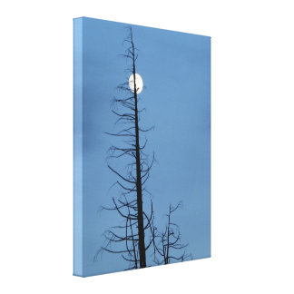 Moon Speared By Tree Gallery Wrapped Canvas