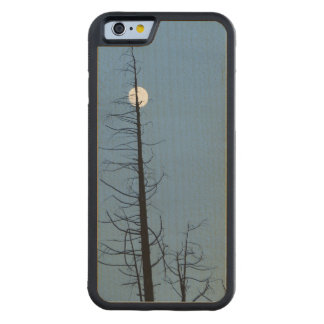 Moon Speared By Tree Carved® Maple iPhone 6 Bumper Case