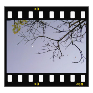 moon- spring photographic print