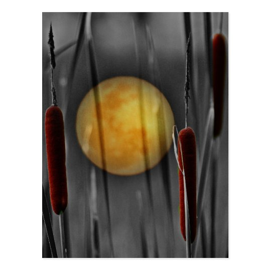 Moon Struck Postcard