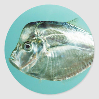 Moonfish atlántico (a la baja) pegatina redonda