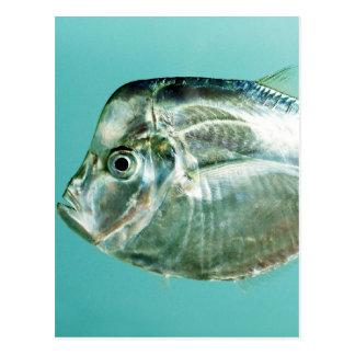 Moonfish atlántico (a la baja) tarjeta postal