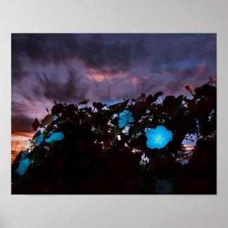 Moonflower Garden at sunset Poster
