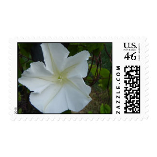 MoonFlower Postage Stamps