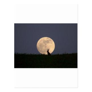 Moongazer Post Card