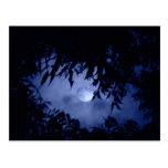 Moonglow Tarjeta Postal