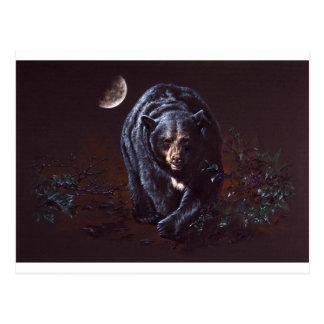 Moonlight Black Bear Postcard