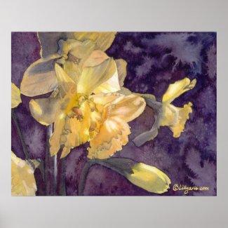 Moonlight Daffodils Watercolor Poster Print print