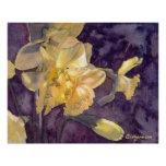 Moonlight Daffodils Watercolor Poster Print