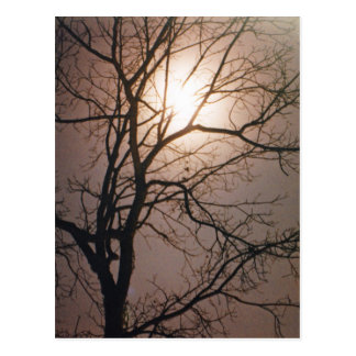 Moonlight Dream Postcard