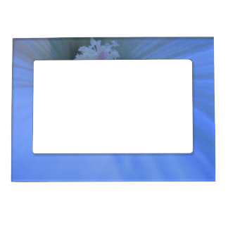 Moonlight Lavatera Magnetic Picture Frame