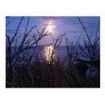 Moonlight - Postcard