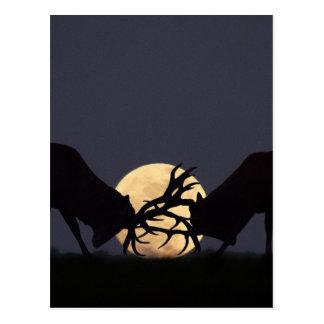 Moonlight Rut Postcards