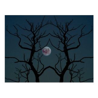 Moonlight Tree Silhouette Postcard