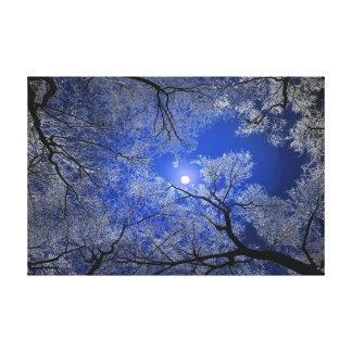 Moonlight Trees Canvas Print