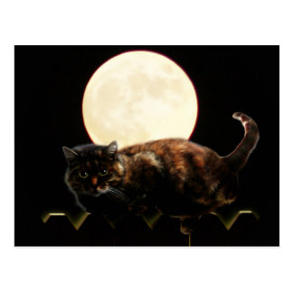 Moonlit Cat on a Fence With Full Moon Postcard