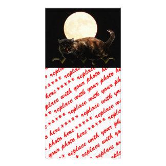 Moonlit Cat Photo Greeting Card
