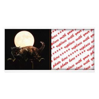 Moonlit Cat Photo Cards