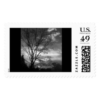 Moonlit Night Postage