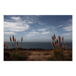 Moonlit Sea Oats Poster