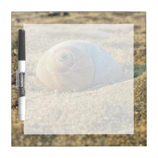 Moonsnail On Sand Dry-Erase Board