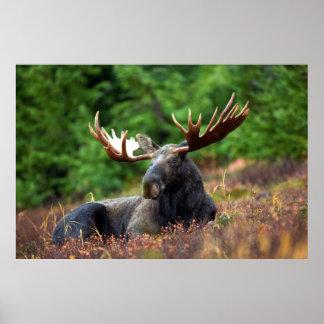 Moooose! Print