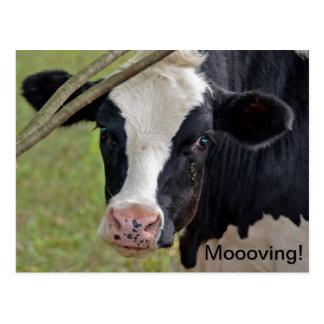 Moooving Announcment Postales