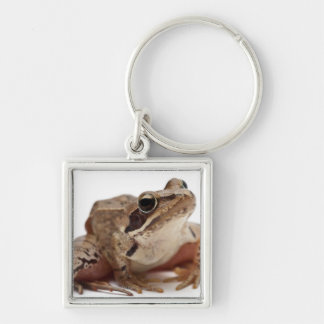 Moor Frog - Rana arvalis Silver-Colored Square Keychain