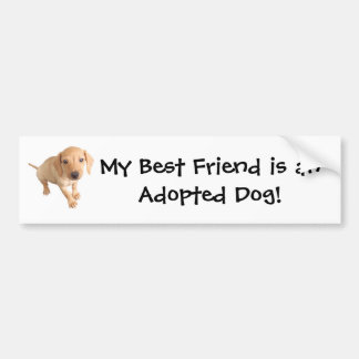 Moore Humane Society Bumper Sticker