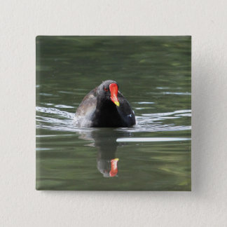 Moorhen and Reflection Button
