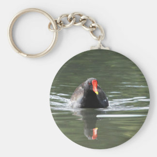 Moorhen and Reflection Key Chains