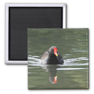 Moorhen and Reflection 2 Inch Square Magnet