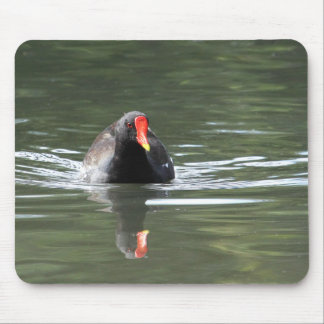 Moorhen and Reflection Mouse Pad