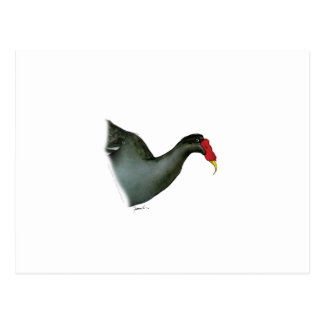 moorhen bird, tony fernandes postcard