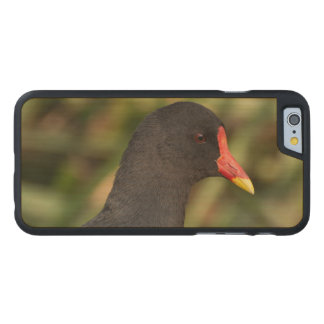 Moorhen Carved Maple iPhone 6 Case