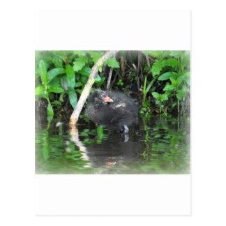 Moorhen Chick on Brambles Post Card